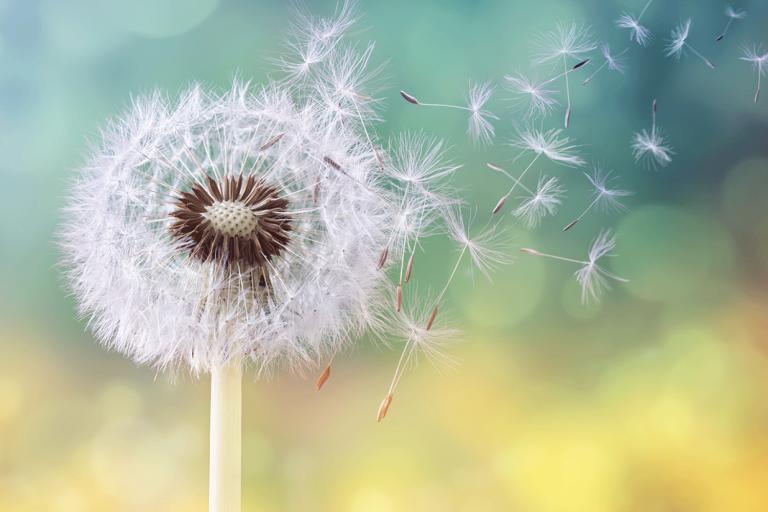 bu illerde yasiyorsaniz dikkat edin polen alerjisi tehlikeli olabilir