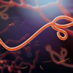 ebola salgininin nedeni virus mu yoksa ihmal edilen hijyen mi