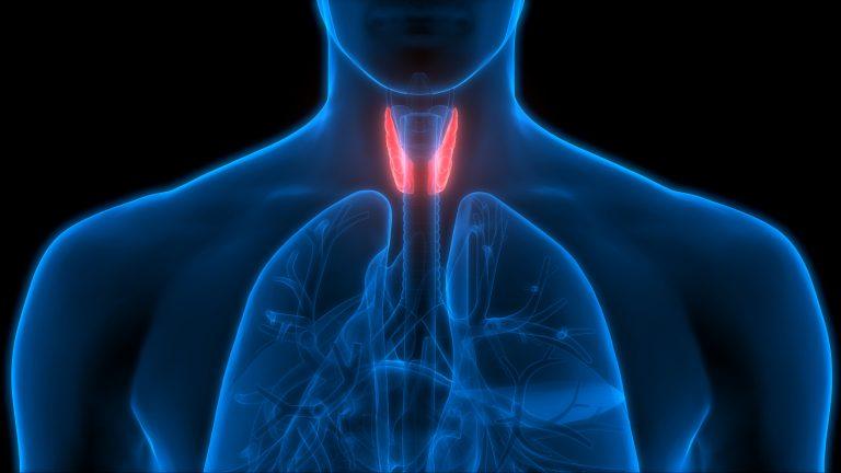 tiroid nedir tiroid belirtileri nedenleri ve tedavisi